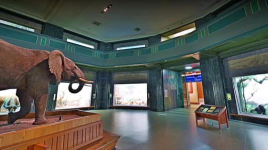 Activități online – Tur virtual în Muzeul American de Istorie Naturală